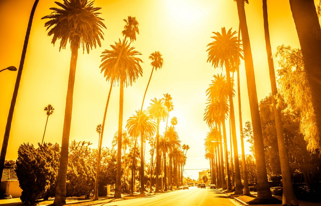 Street with palm trees in Beverly Hills
